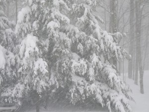 Snow Storm, Dec. 2008